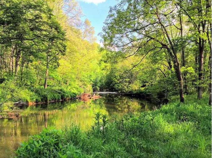 Little River 1